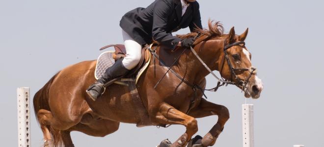 Finimenti per cavalli: cosa sono e come regolarli
