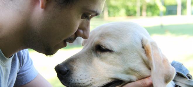 Educare, non addestrare: nuovi approcci dei corsi per cani